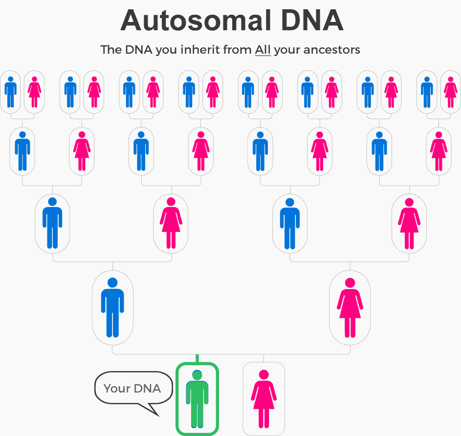 autosomal DNA inheritance chart