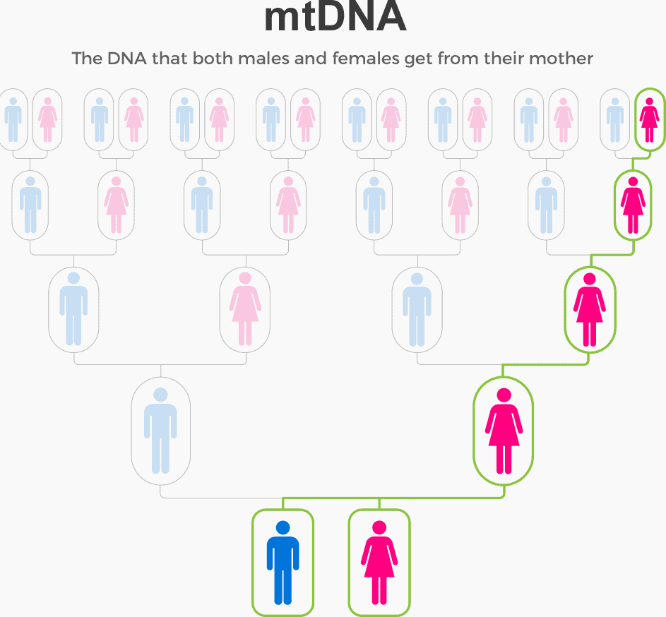 mitochondrial dna inheritance