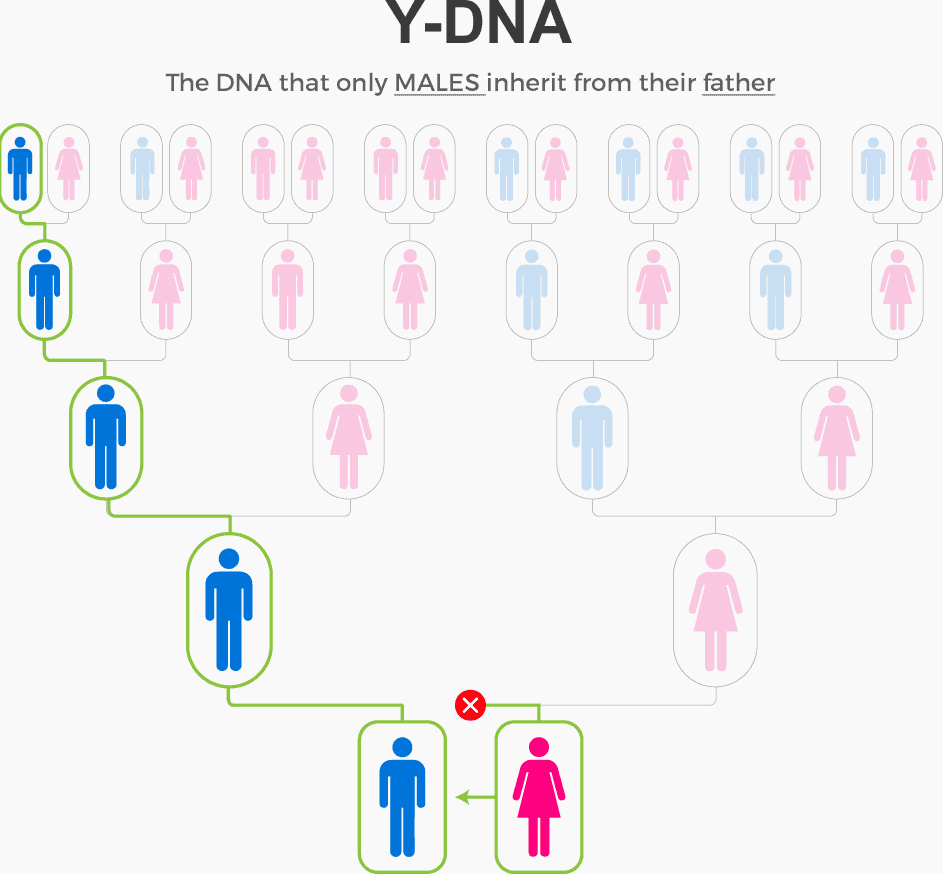 Y-DNA inheritance