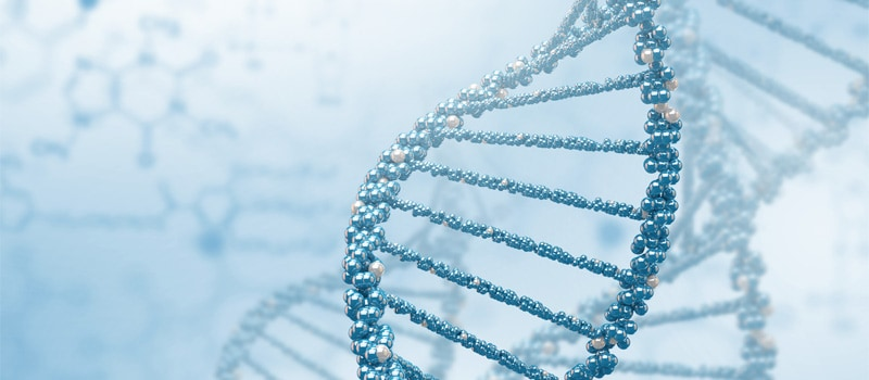 How Many Generations Does DNA Go Back